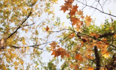 autumnal-leaves-978739_1920